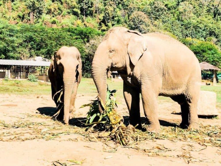 Best Thailand Animal Sanctuary: Elephant Nature Park