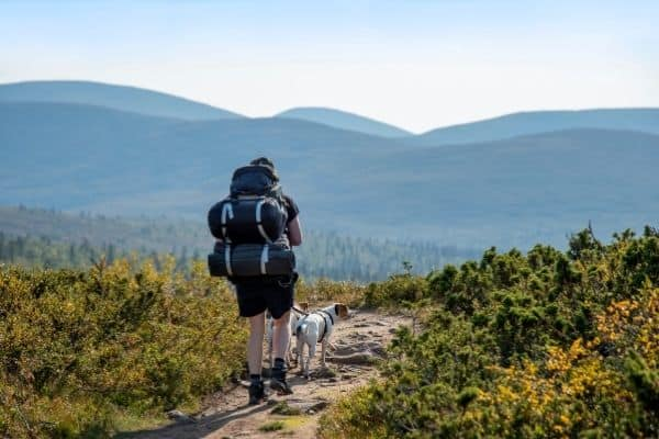 Hiking with a Dog—Top Tips for Safety and Fun