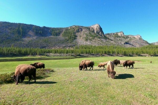 Top 3-Day Yellowstone Itinerary—America's Wonderland